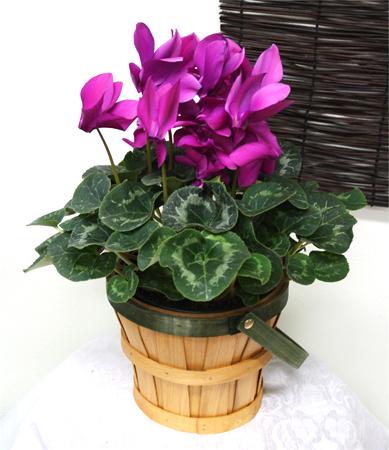 Flowering plant 2