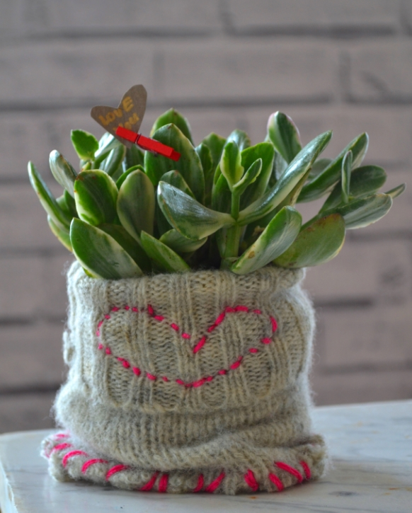Nothing says I LOVE YOU...more than a succulent in a sweater...