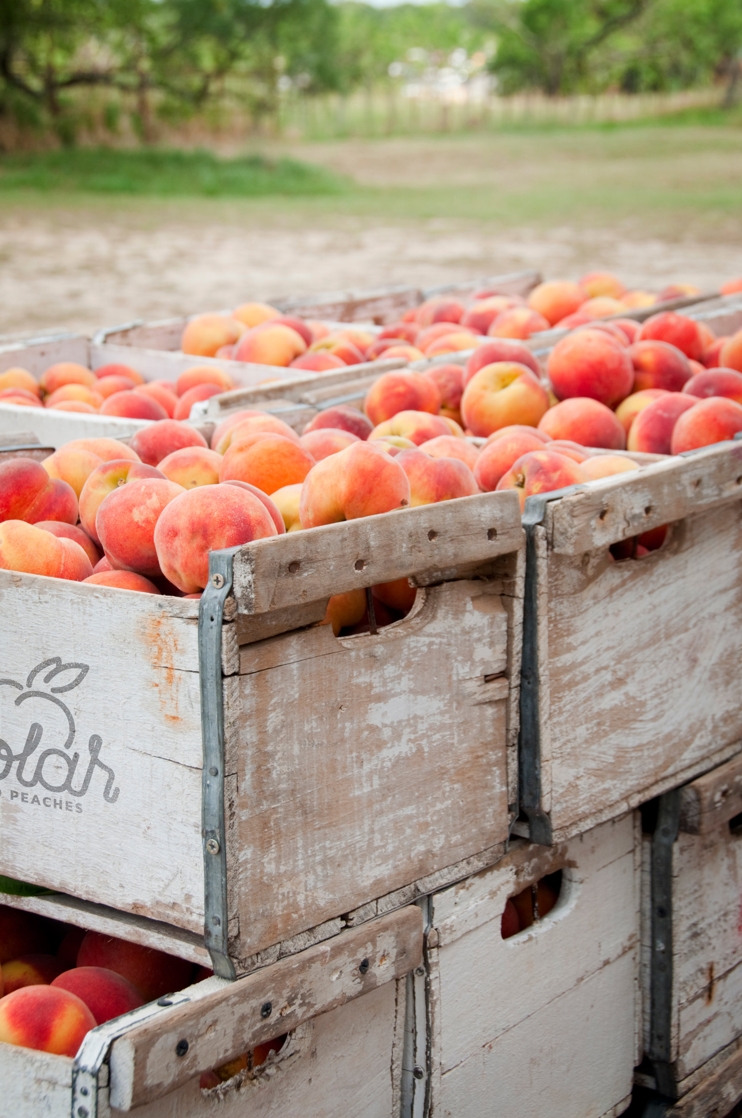 Orchard Boxes.jpg