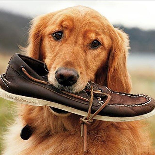 Day of Dogs Pt. 2 . . . #doggo #college #frat #sperry #sorority #tfm #tsm #university
