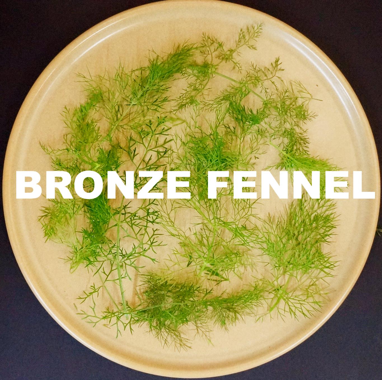 bronze fennel.jpg
