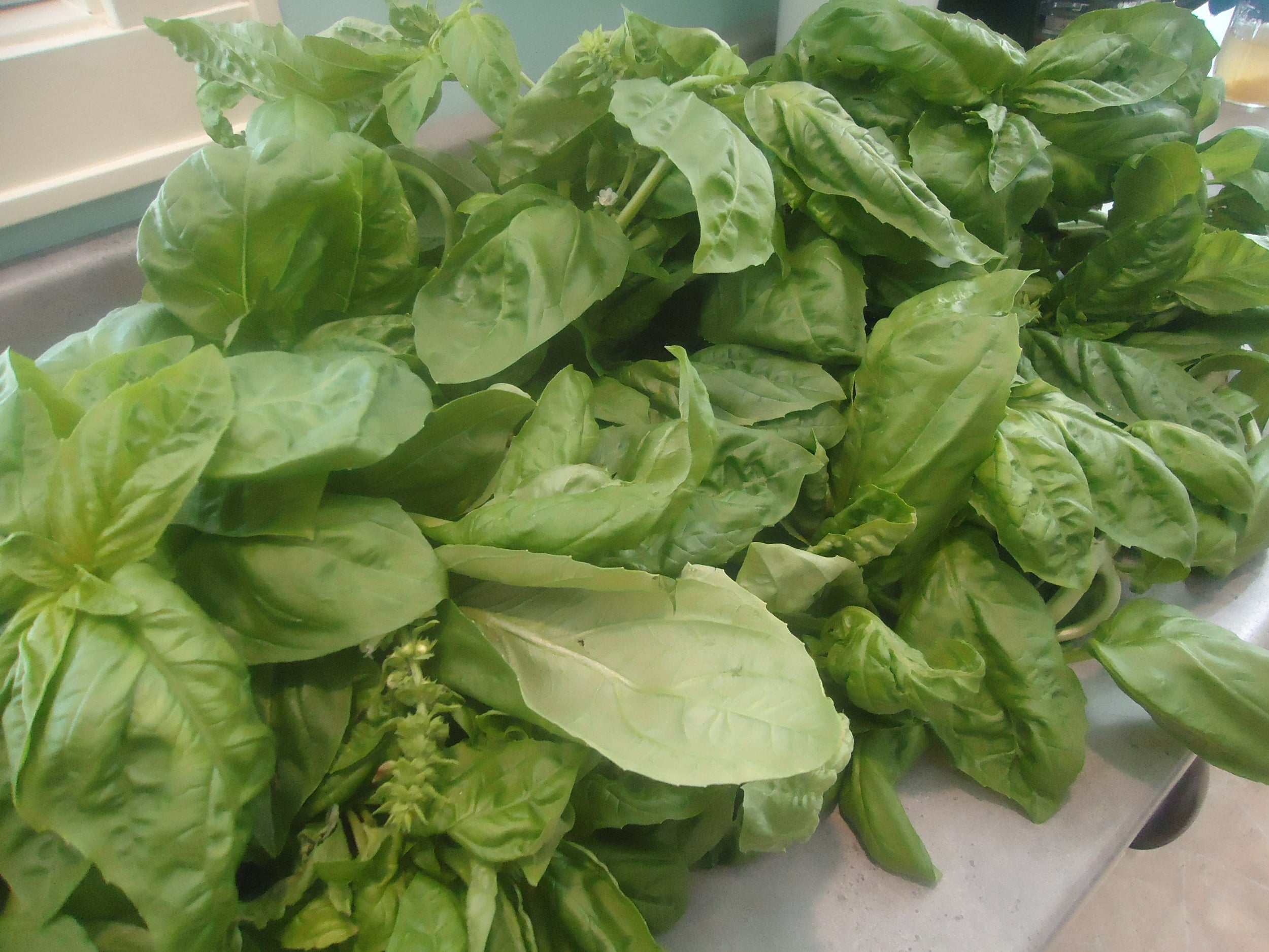 Tucker Farms Basil.JPG