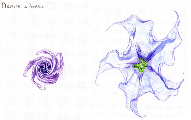 Rideau Fleur