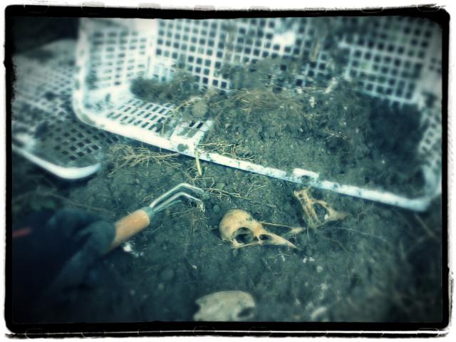 crow dig.jpg