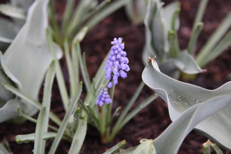 purplerain.jpg