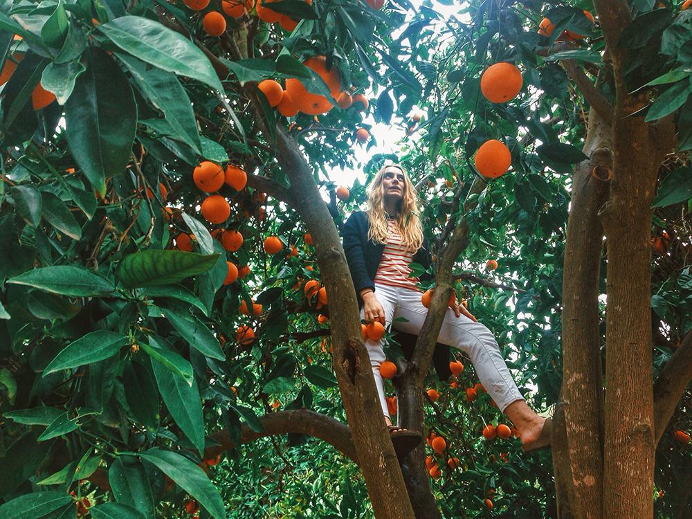 OrangesSMTCF.jpg