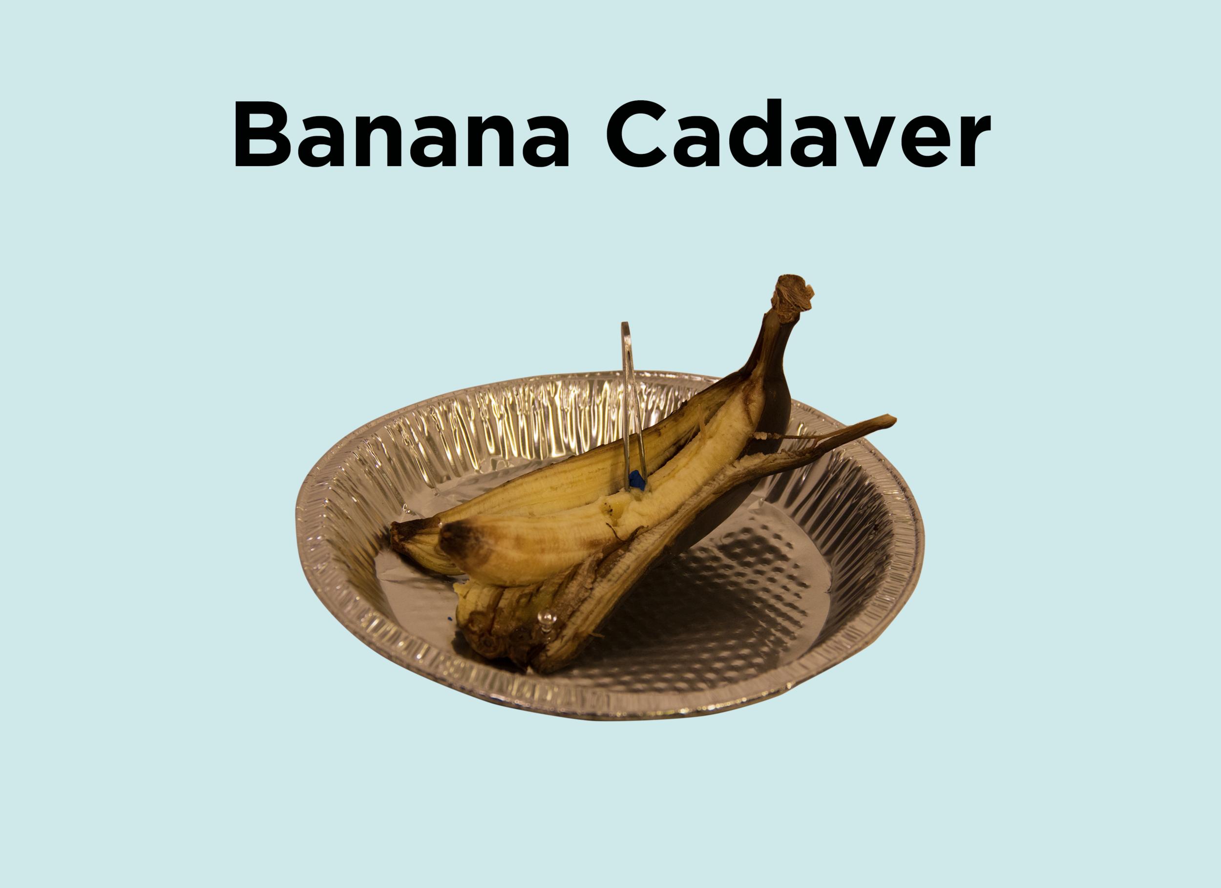 8. Banana Cadaver.png