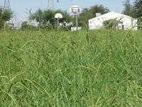 mama marks grass 2.jpg