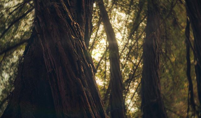 Redwoods and russian lenses