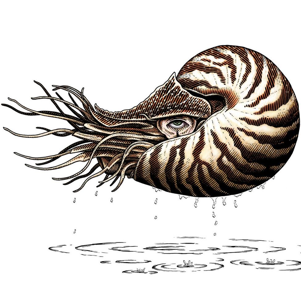 Nautilus White.jpg