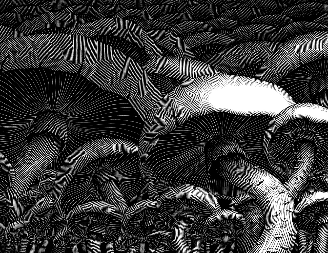 Dark Eden 1, Mushrooms