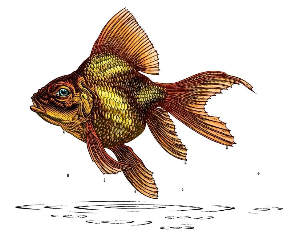 Outta Water, Goldfish
