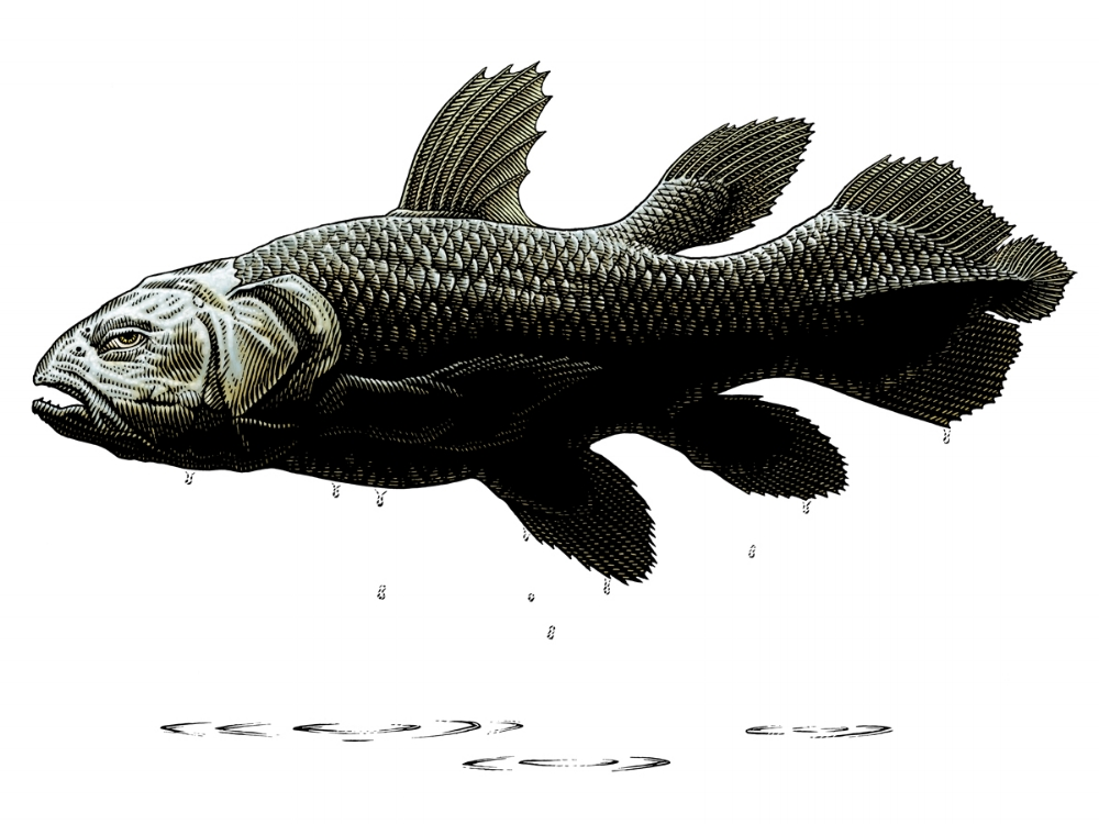 Outta Water, Coelacanth