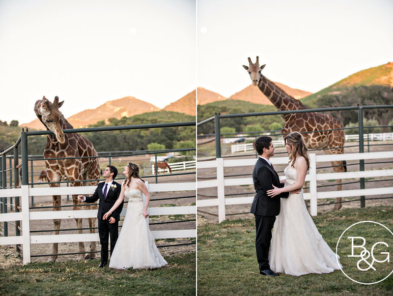 The happy couple with Stanley the Giraffe