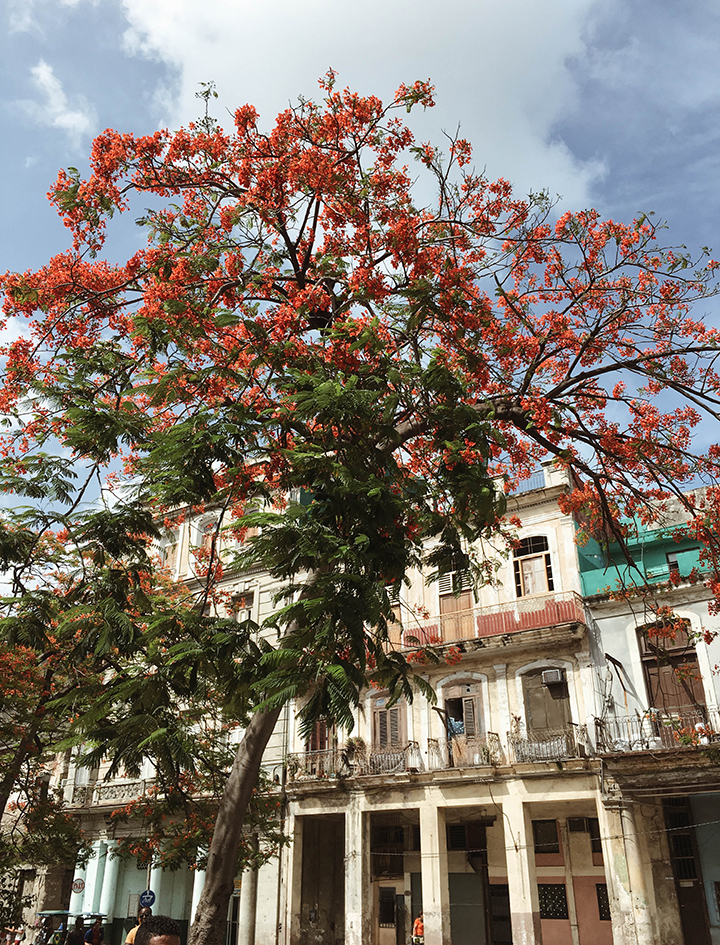 Havana-Cuba-26.jpg