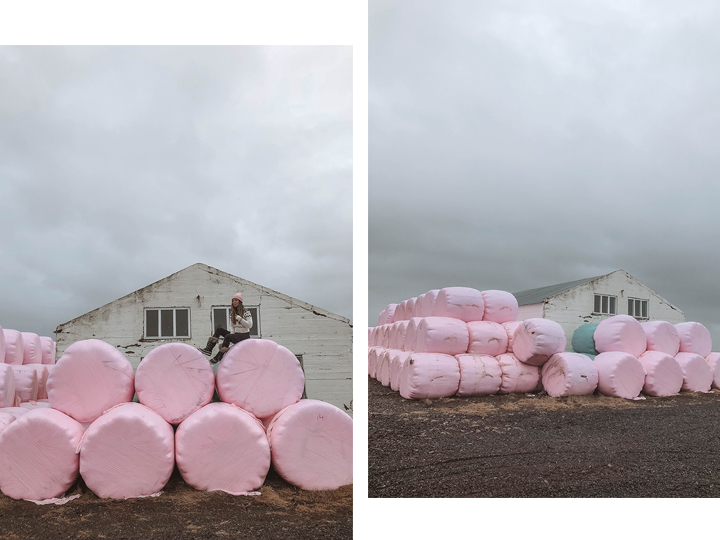 Bales of hay - these were wrapped in all different colors, but of course I was drawn to the pink ones.
