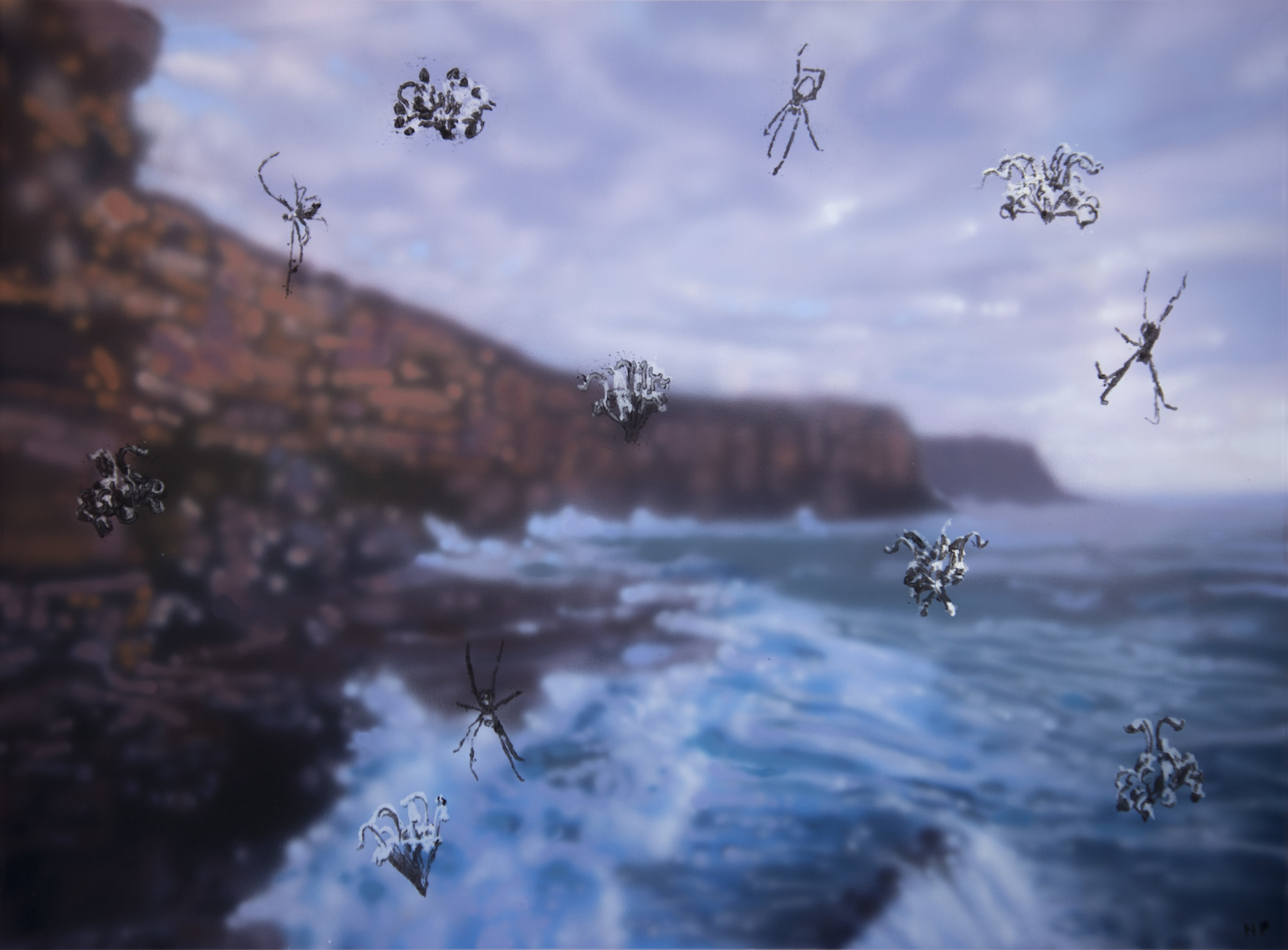 Spider Flowers, North Head