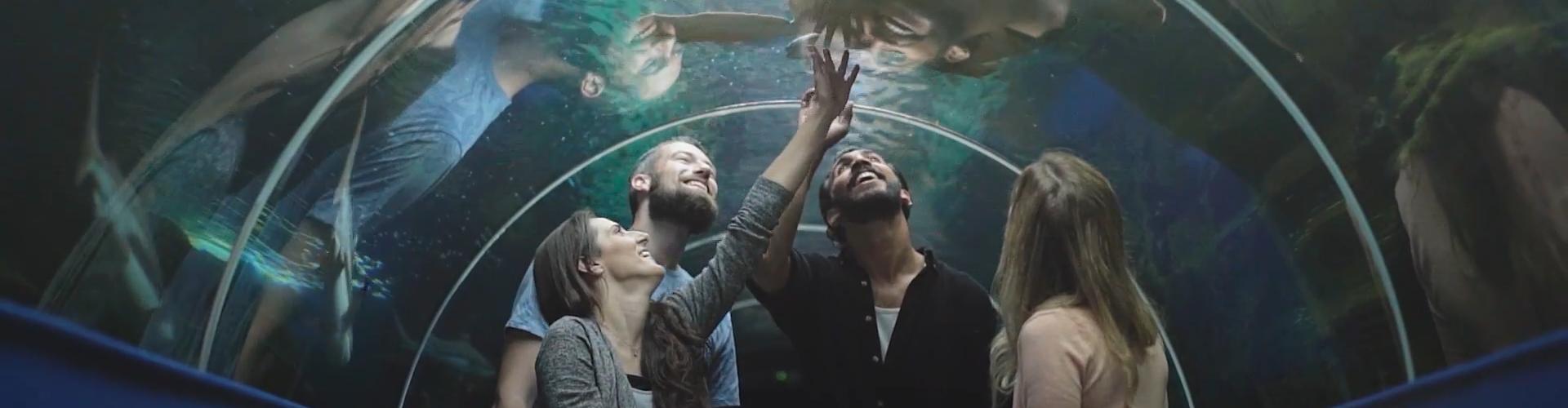 BOURNEMOUTH 'SENSES' - INTERACTIVE VIDEO CAMPAIGN