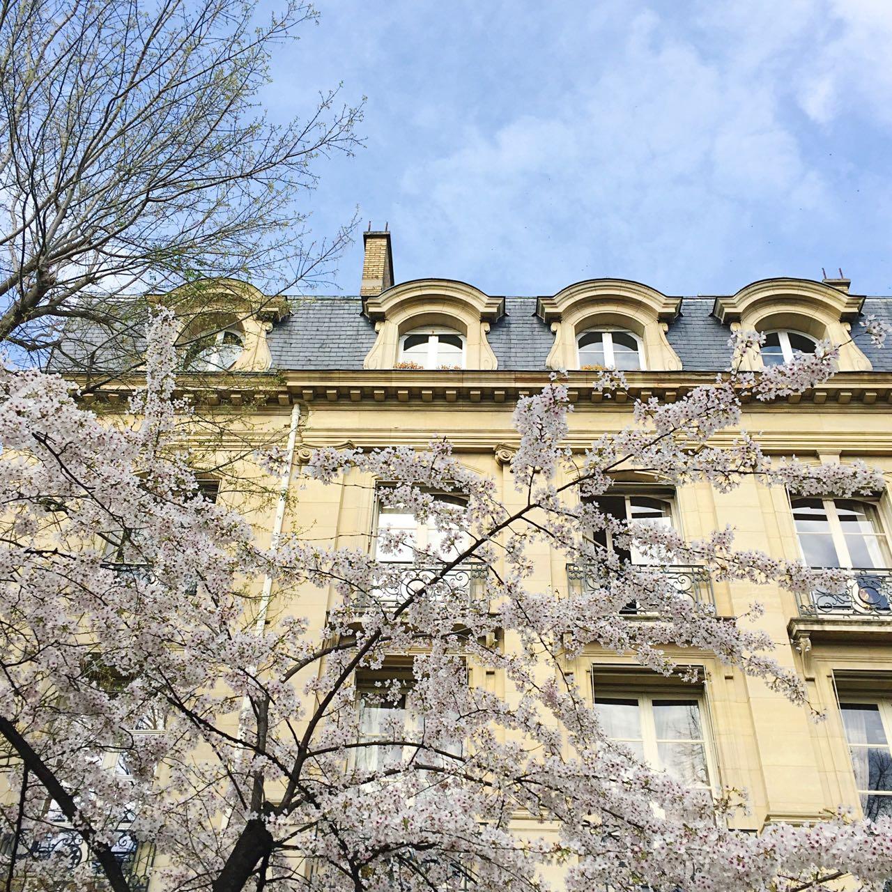 Cherry blossom at Parc du Champ de Mars