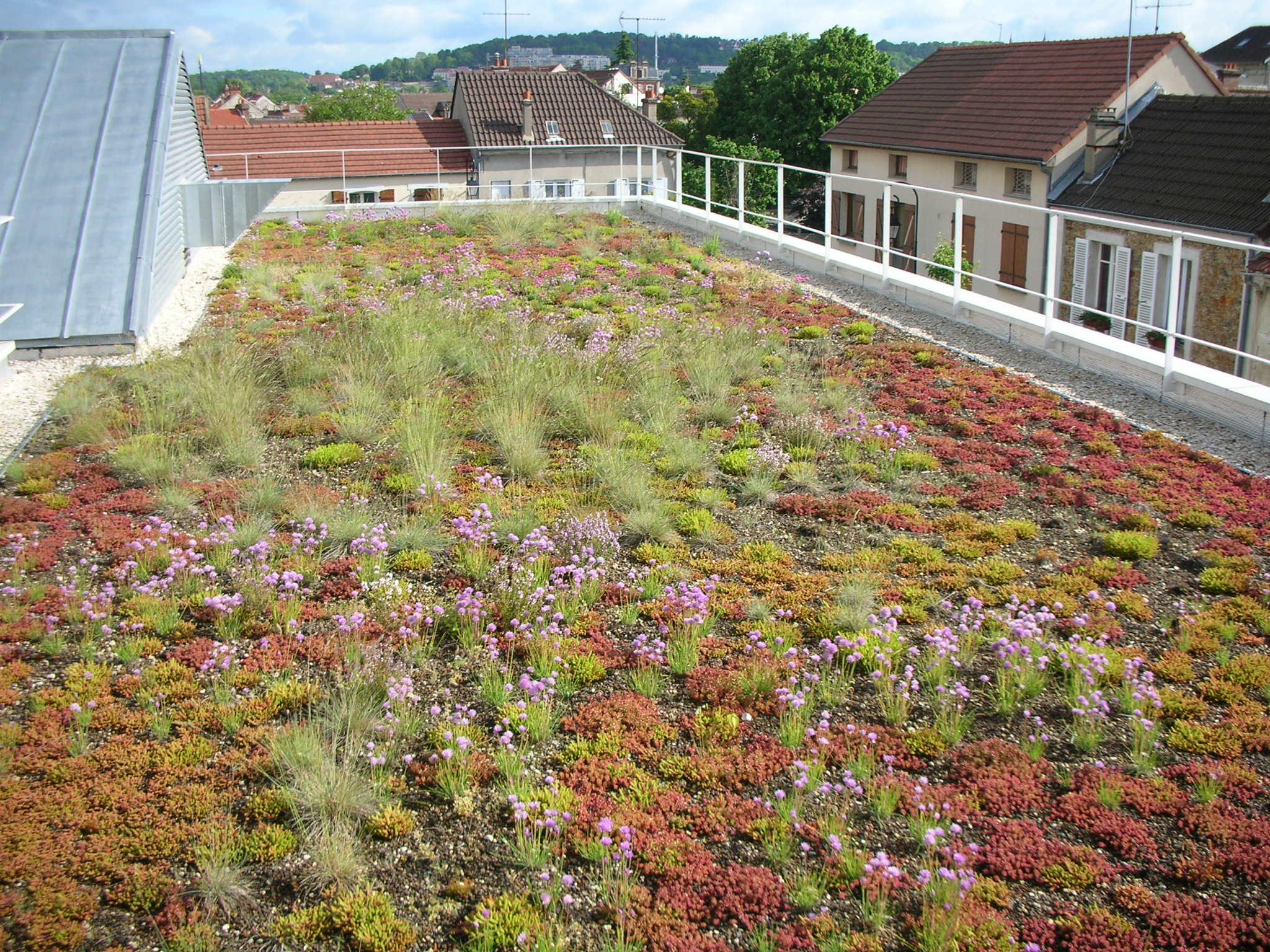 Axter green roof.JPG