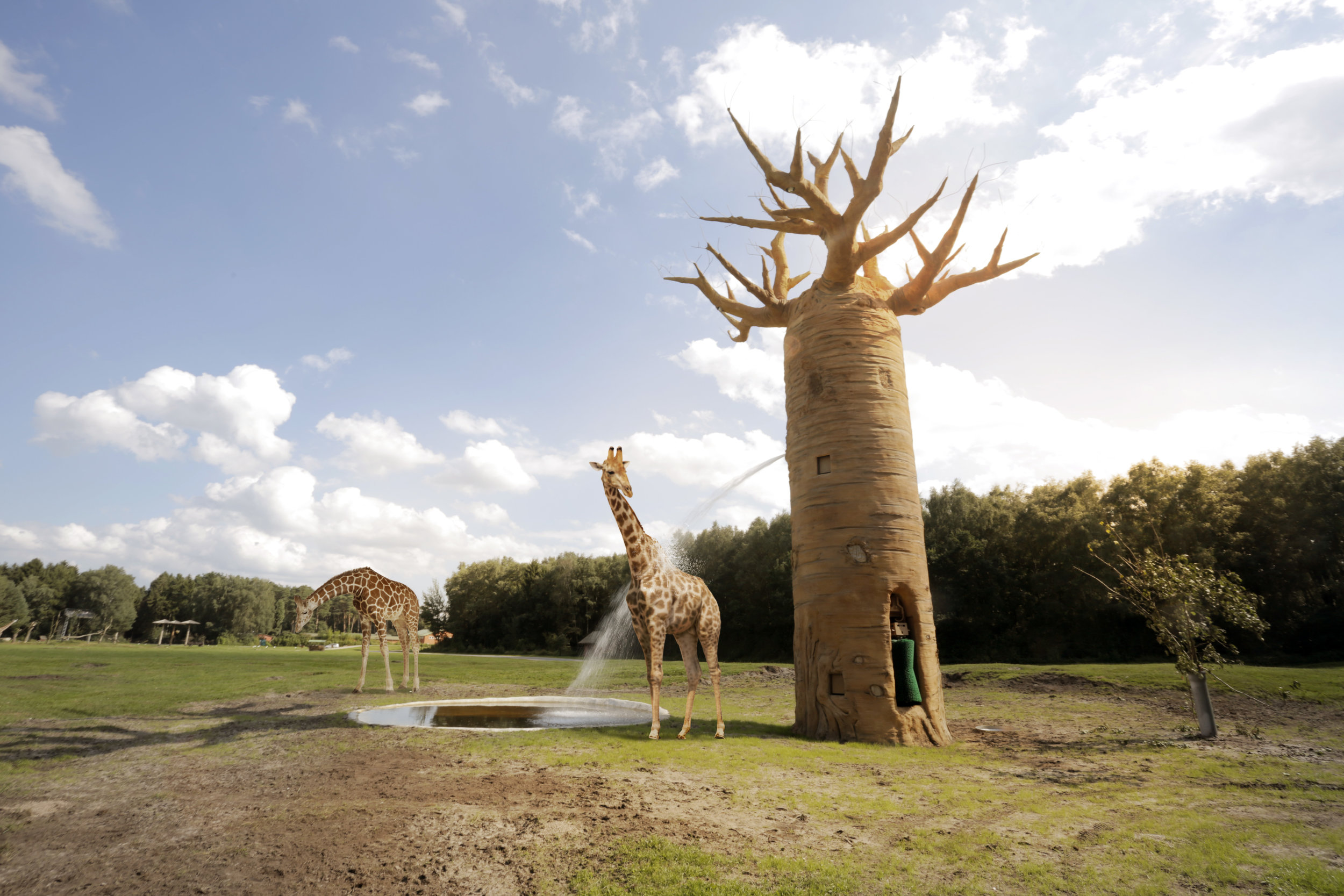 SERENGETI INTERACTIVE BAOBAB TREE <strong>| Interactive Safari experience with behavioral enrichment</strong>