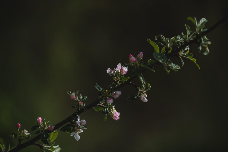 flowers-6471.jpg