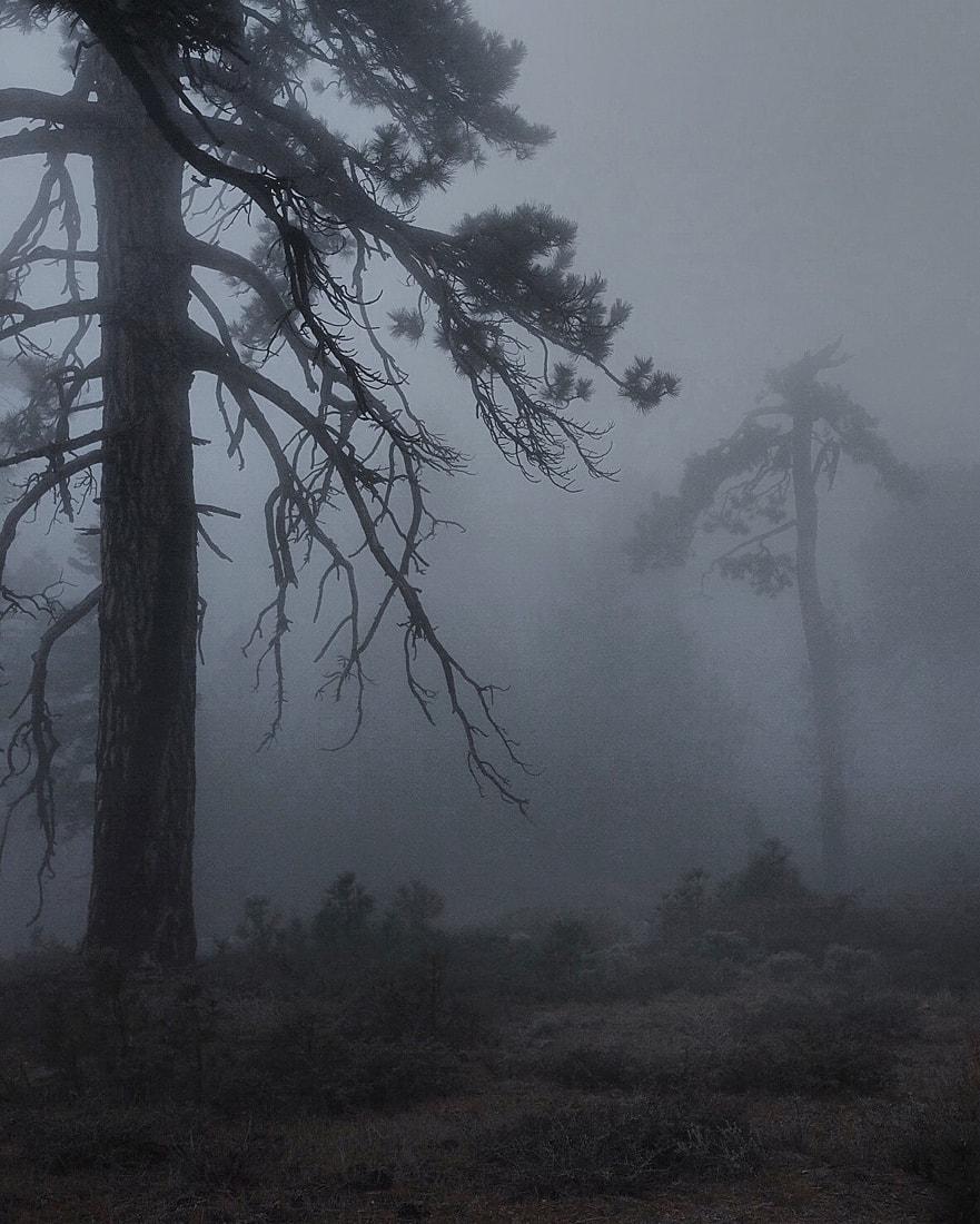 Fog in Wrightwood, CA -  Fujifilm XT-1  &  XF-23mm f1.4