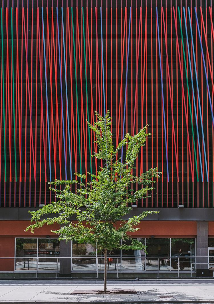 An urban tree in Cincinnati, OH