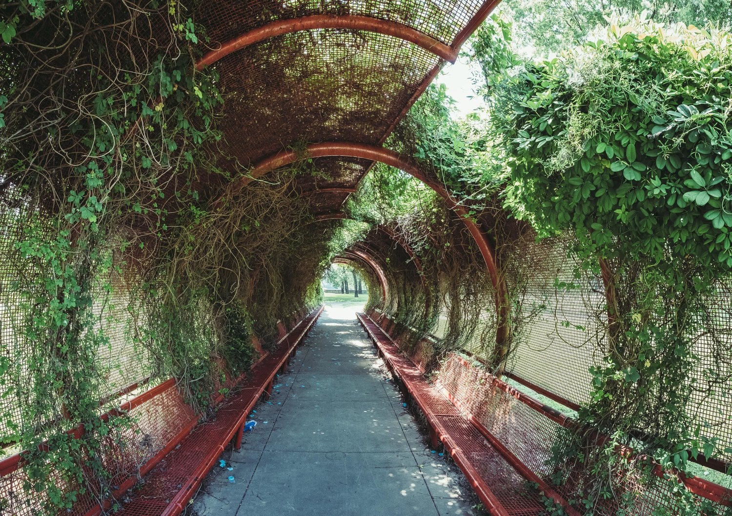 A park tunnel, overtaken by nature in Columbus IN.