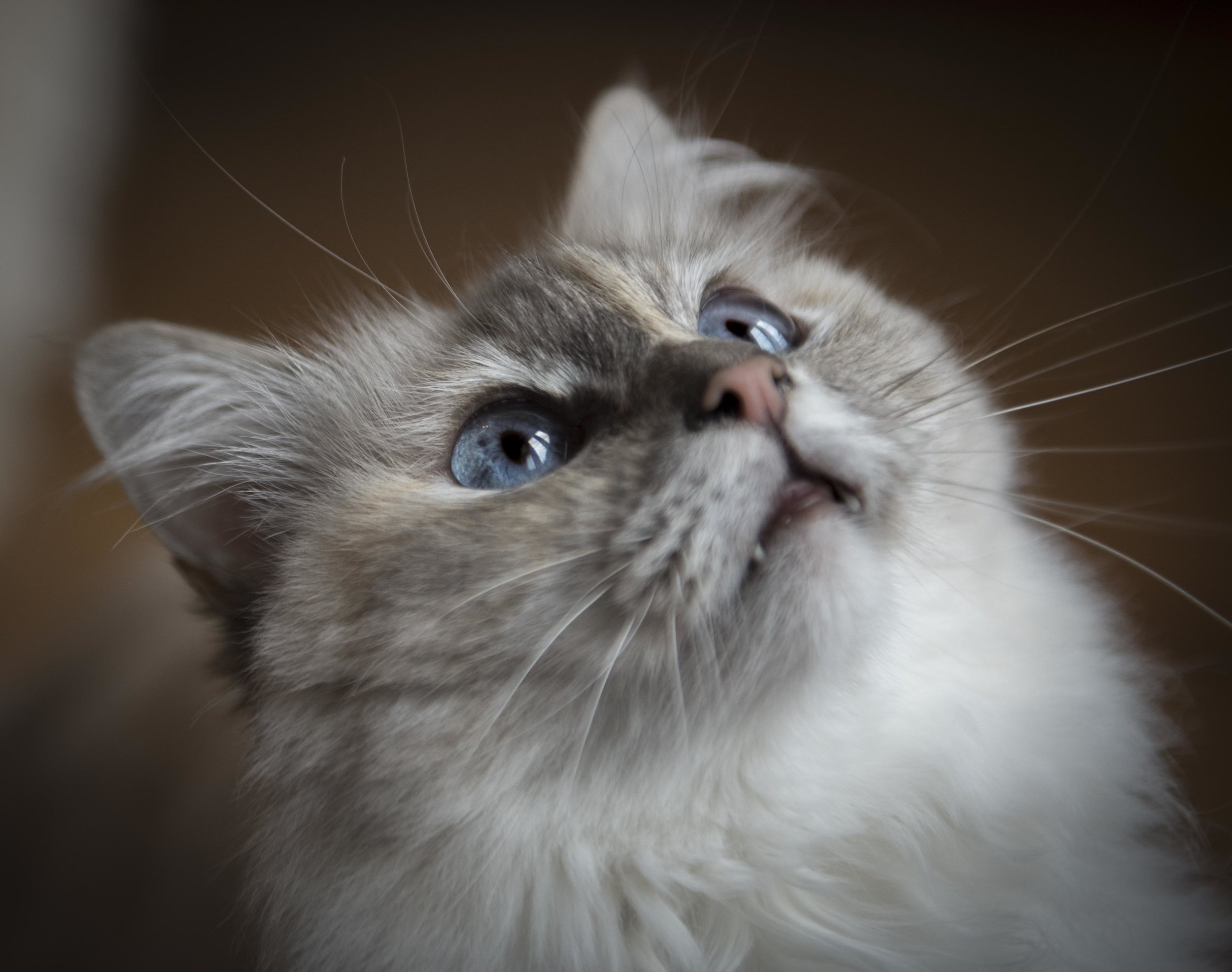 Kennedy cat