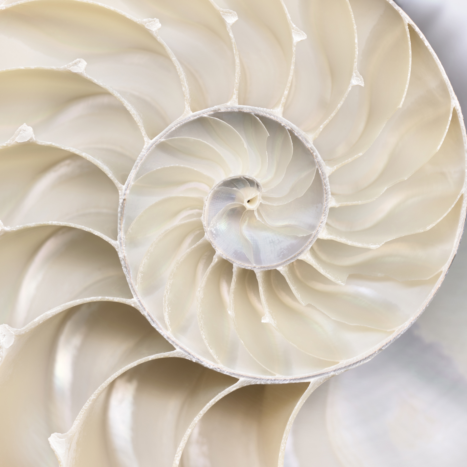 Abstract Shell VI