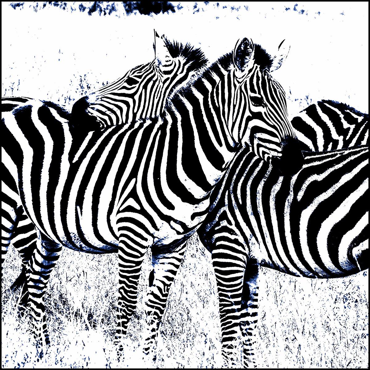 Two Zebras No. 2