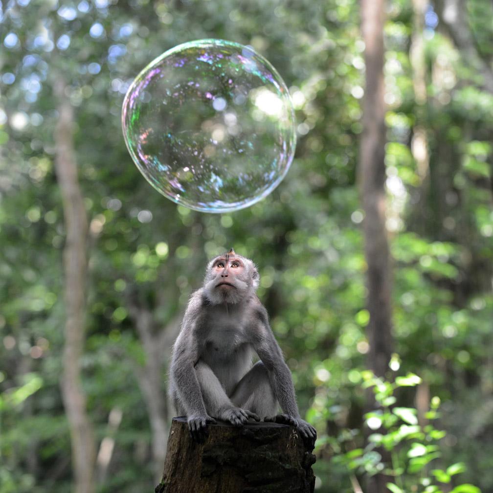 Monkey and Bubble , Monkey Forest, Ubud, Bali,by Kit Kittle Photography
