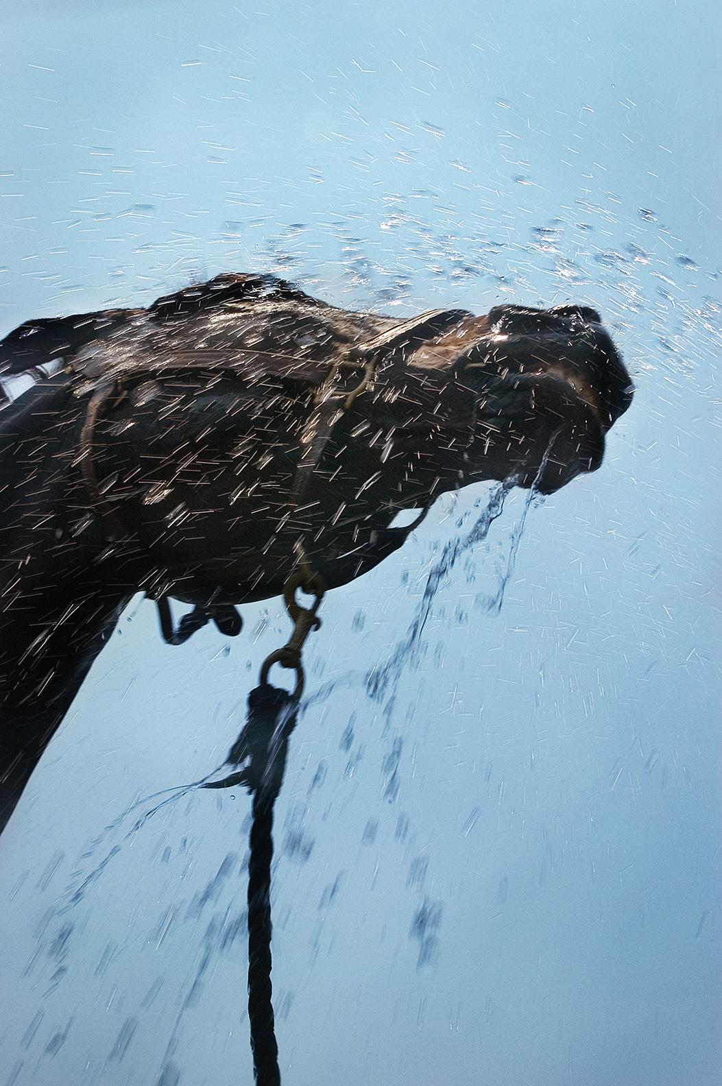 Untitled , by Shelli Breidenbach Photography