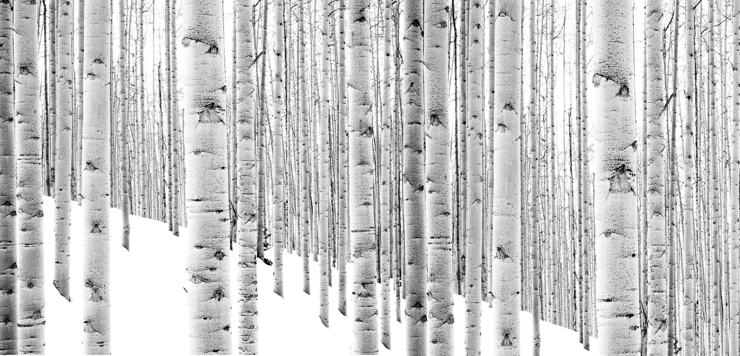 Endless Forest,  by Shelli Breidenbach