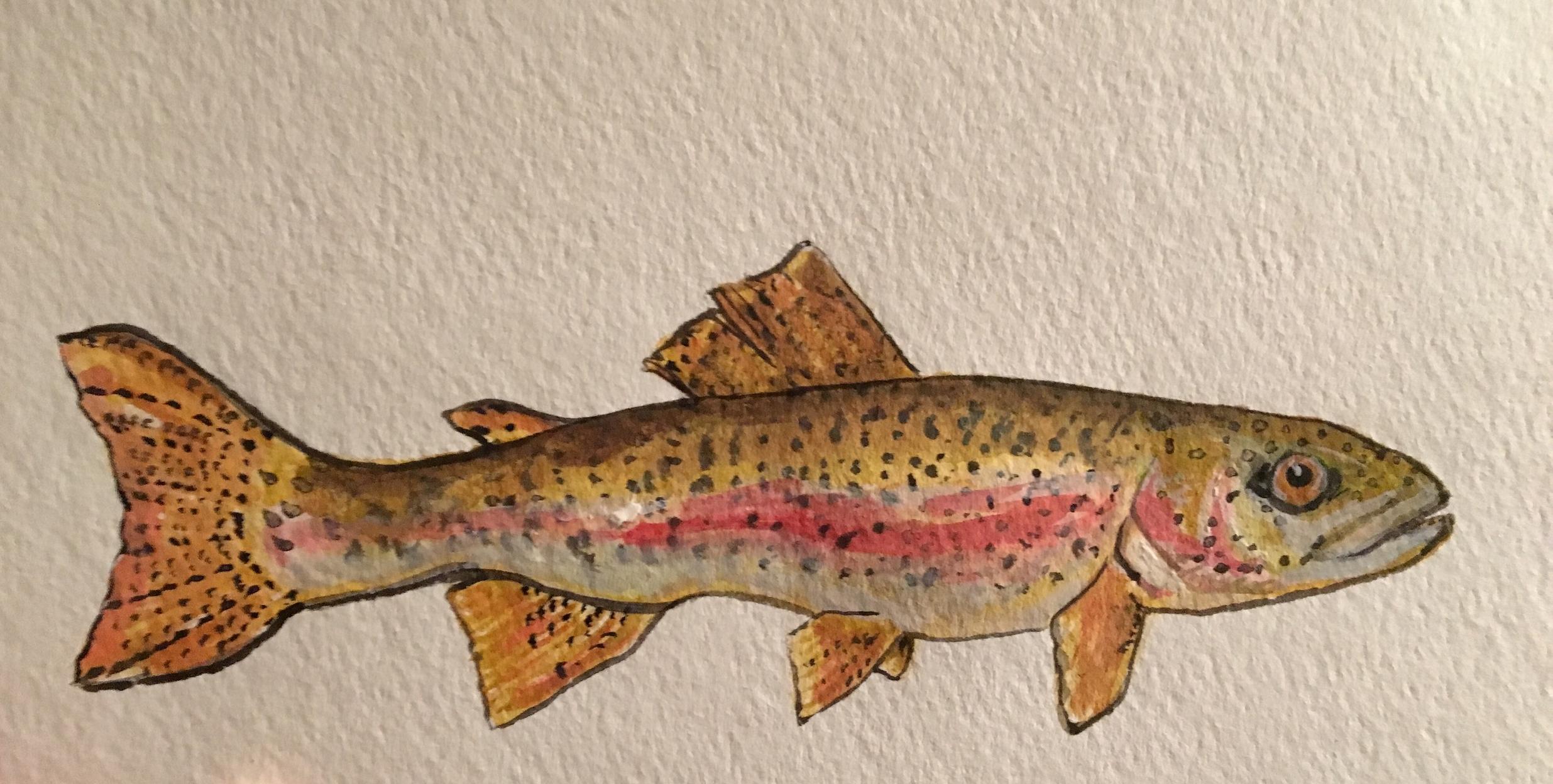 Rainbow Trout