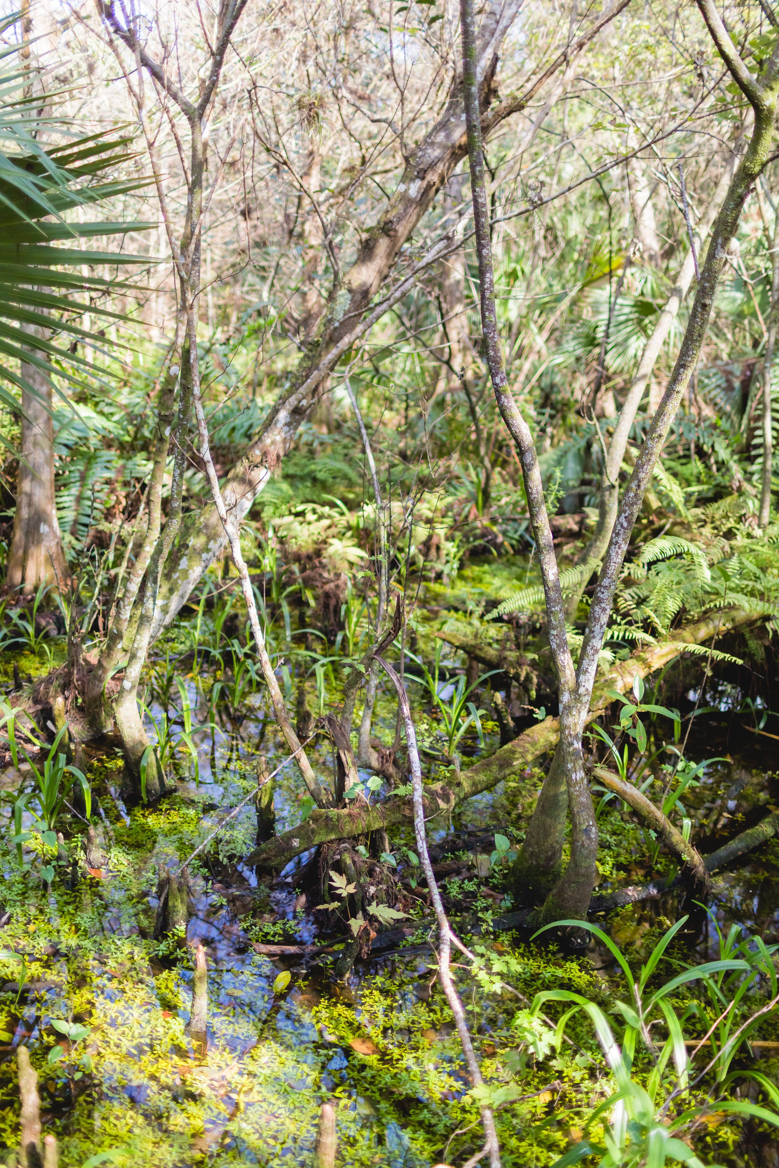 Florida-fern-forest-five-for-may-blog-travel-style-9.jpg
