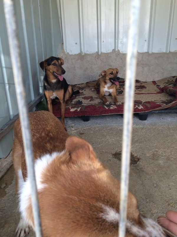 Dogs at Diana's Bethlehem Animal Shelter and Administration Unit   (BASAU)