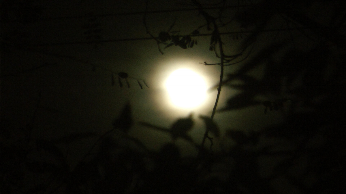 """The birth happened at night, and this picture also reminds me of how the birth is perceived by the baby - that it's dark and that it sees the light on the edge. The moon also symbolizes womanhood."" Image credit: Shirly Naveh"