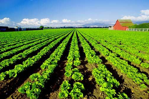 Healthy farm.jpg