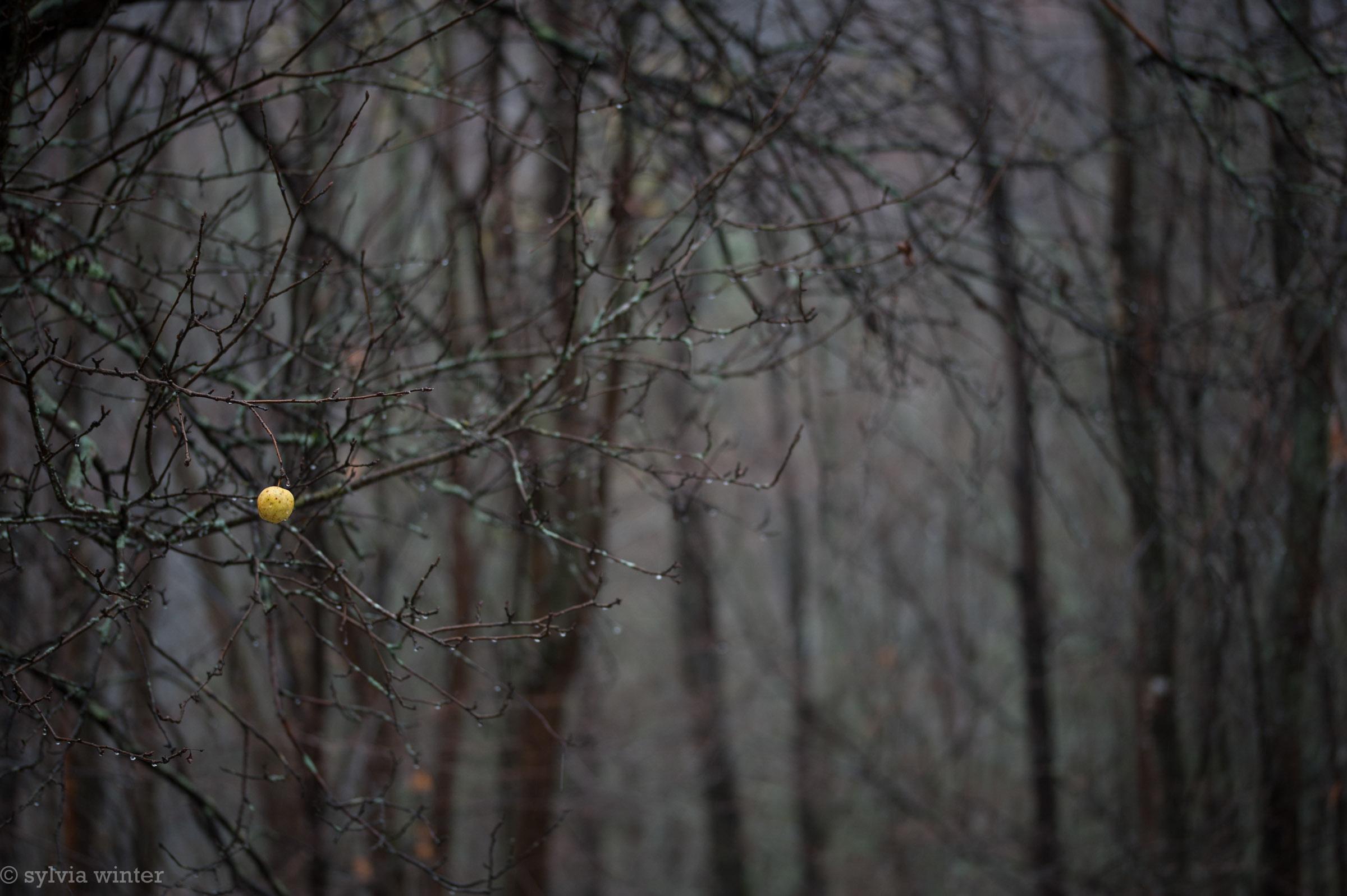 © Sylvia Winter