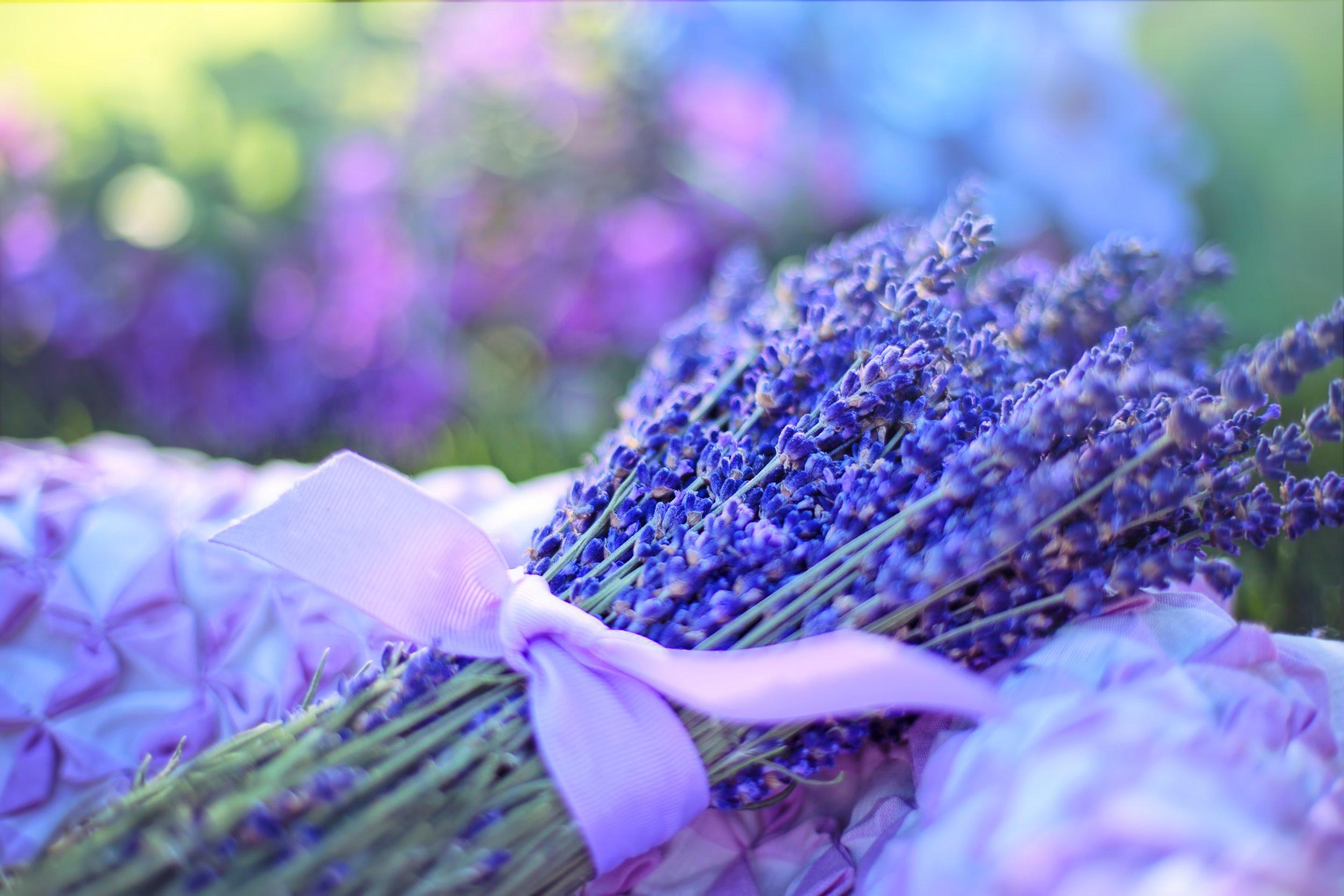 lavender-2482374.jpg