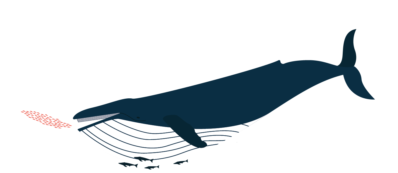 BaleenDesign_illustration_humpbackwhale_krill.png