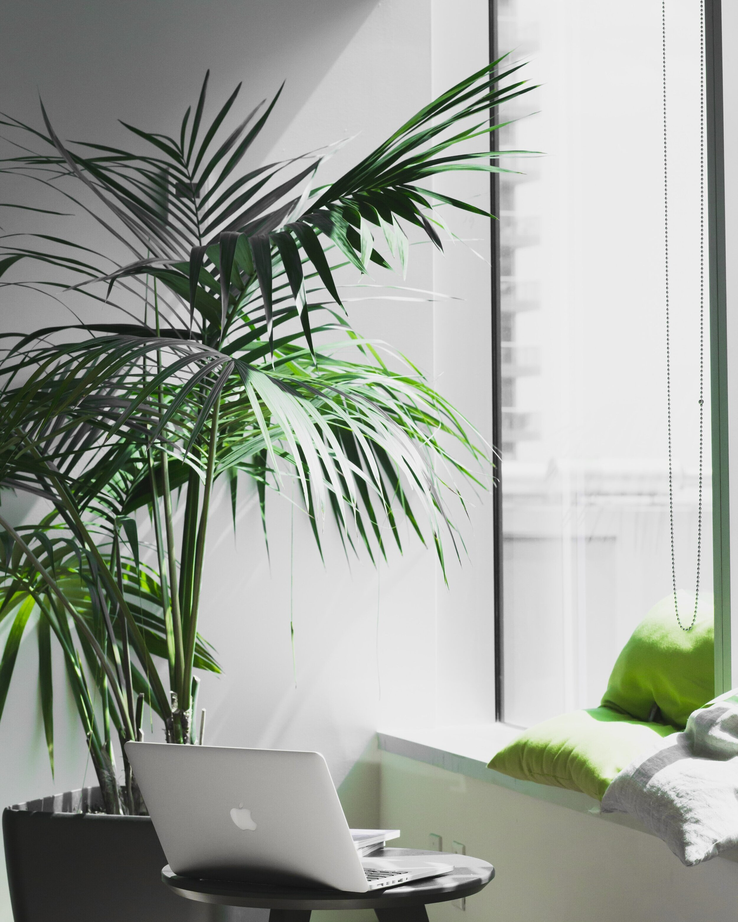 14 Reasons You Need Plants In The Office