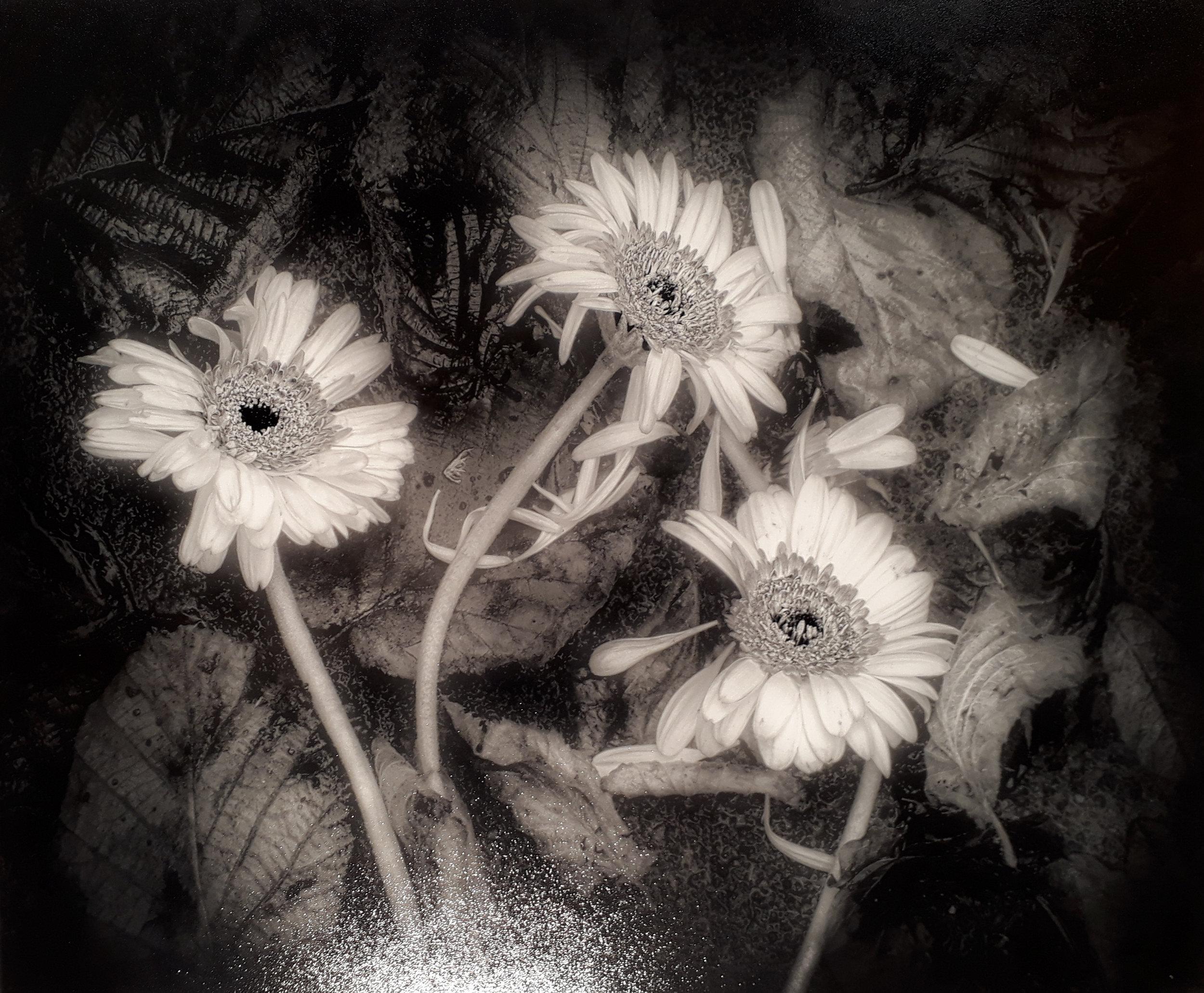"1. Janet Downes - ""Dead Flowers"""