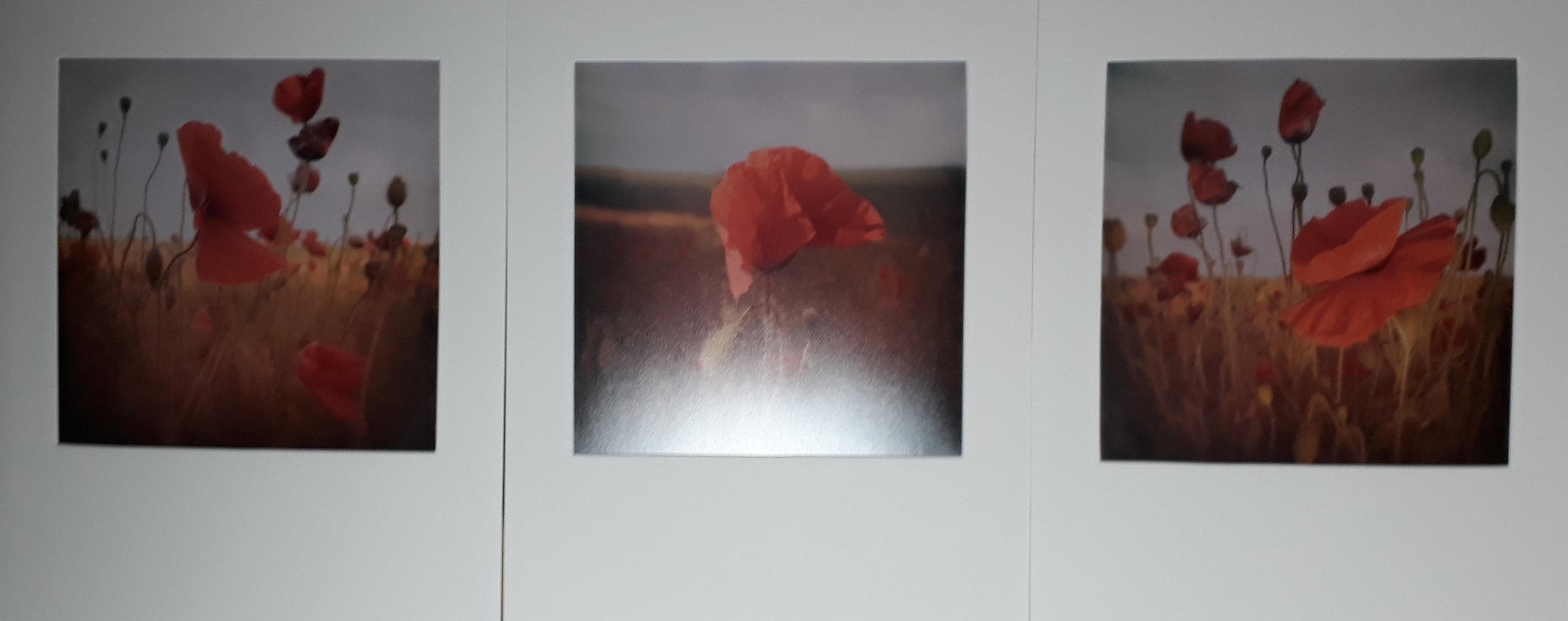 3 -Pollyjoke Poppies - Tim Gilbert