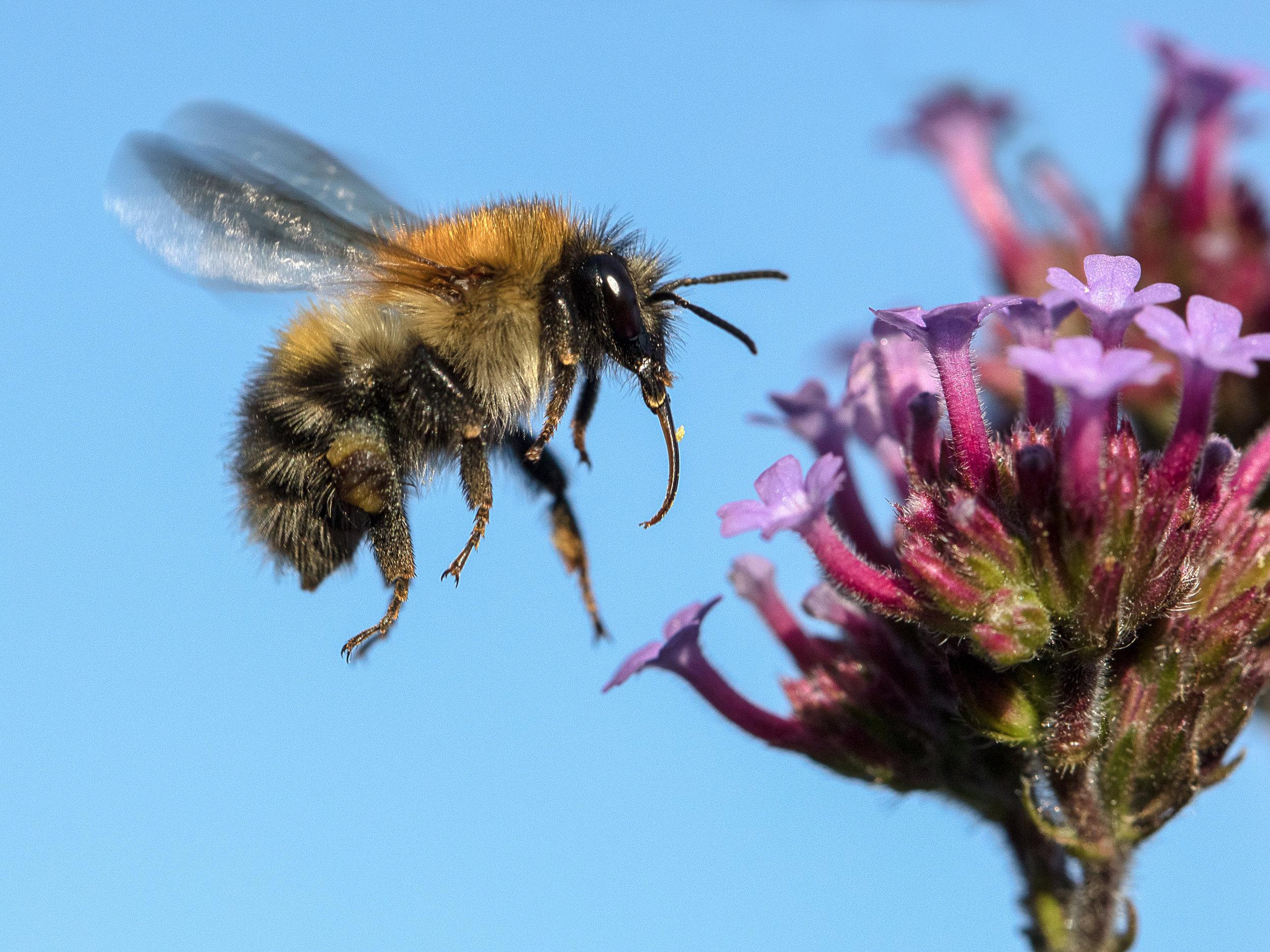 2. Dave Taylor - Bumblebee