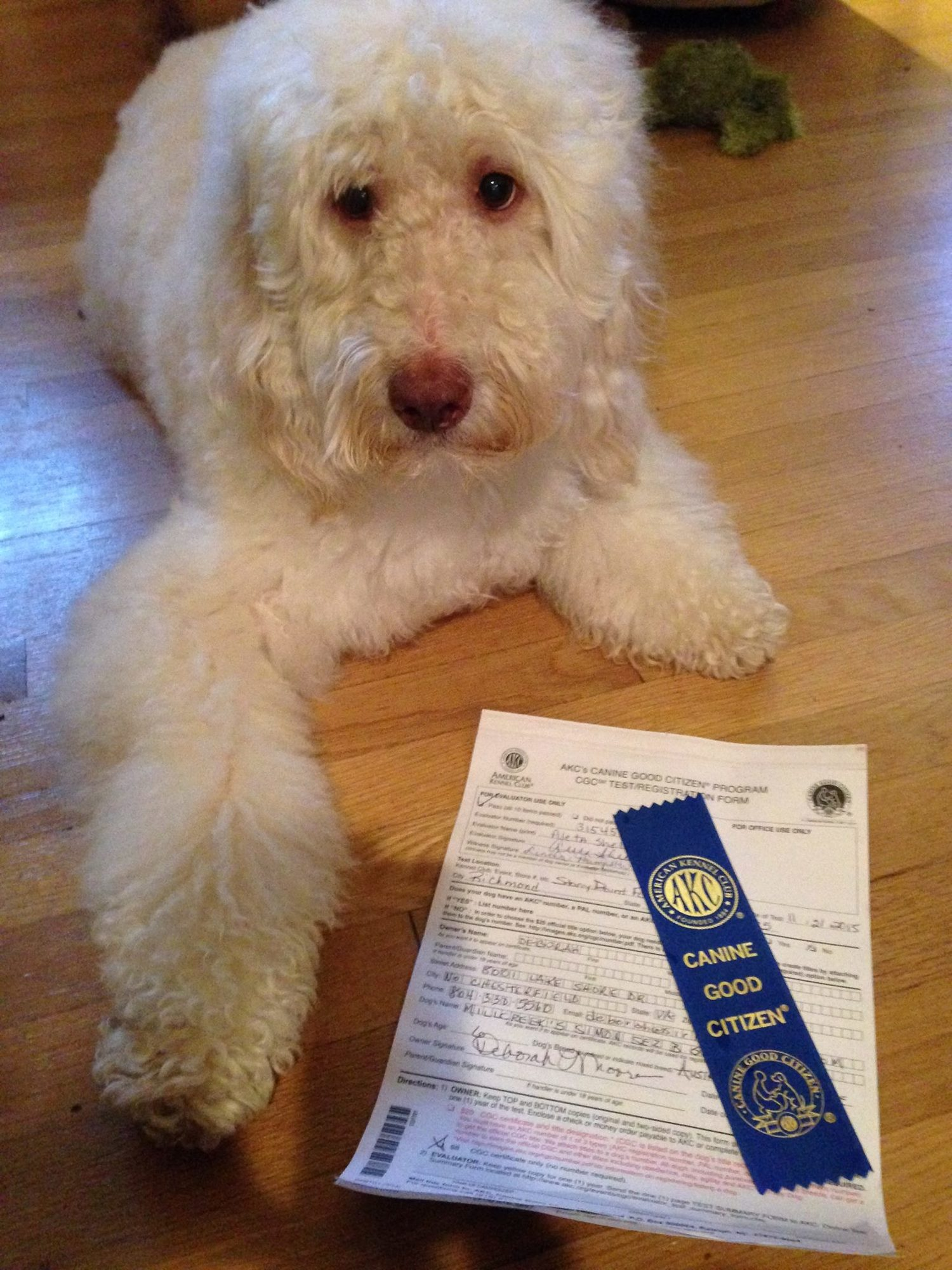 Canine Good Citizen Prep Siriusly Canine Dog Training In
