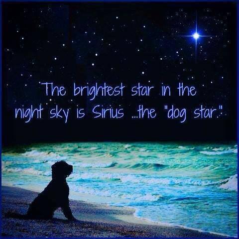 sirius dog star brightest star.jpg
