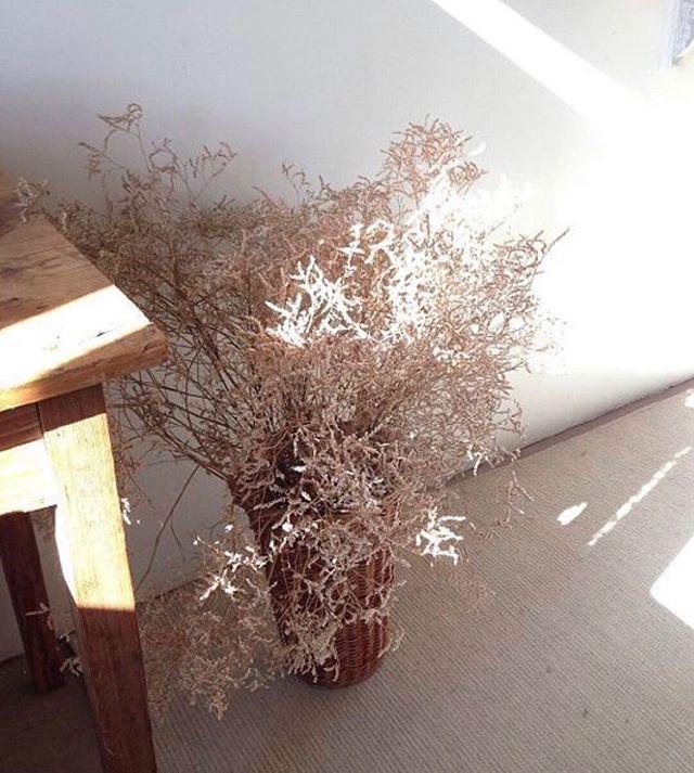 N E U T R A L S . . . #neutrals #neutralcolours #plants #plant #flowers #interiors #scandi #aesthetic #beige